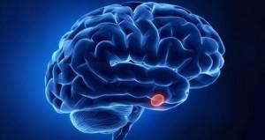 brain-cells11